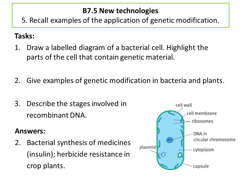 Give examples of genetic modification in bacteria and plants.