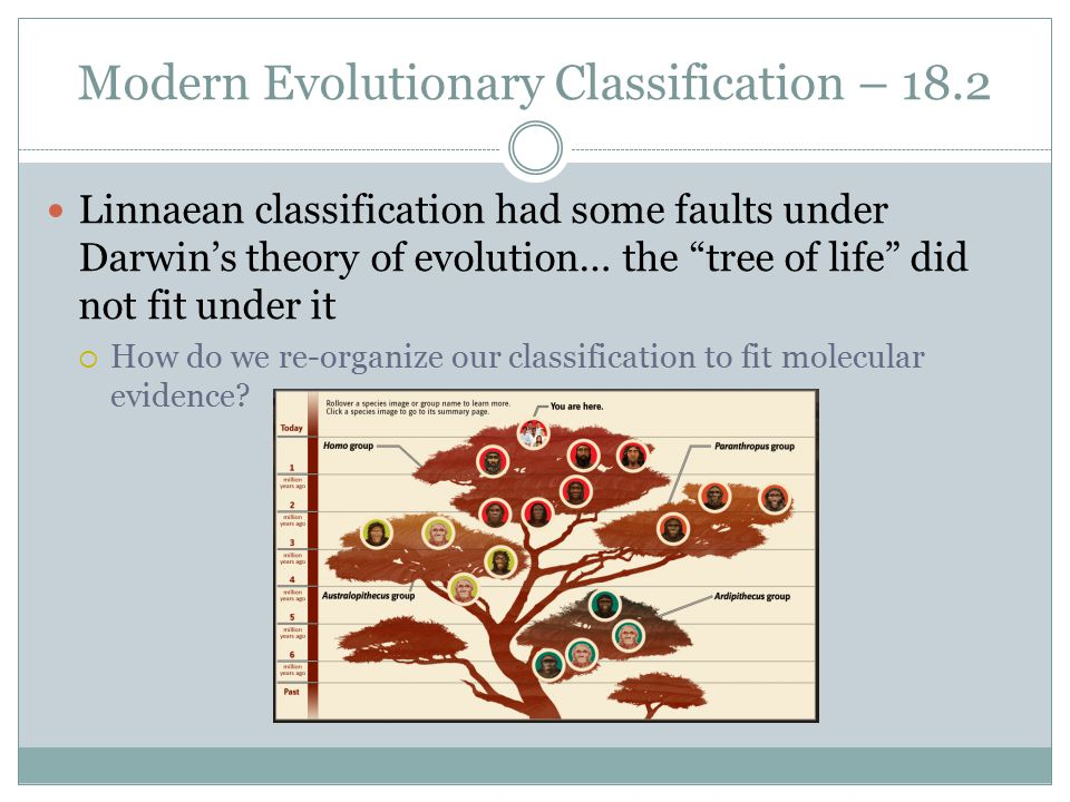 Chapter 18 Ms Luaces Honors Biology ppt video online download – Section 18-2 Modern Evolutionary Classification Worksheet Answers