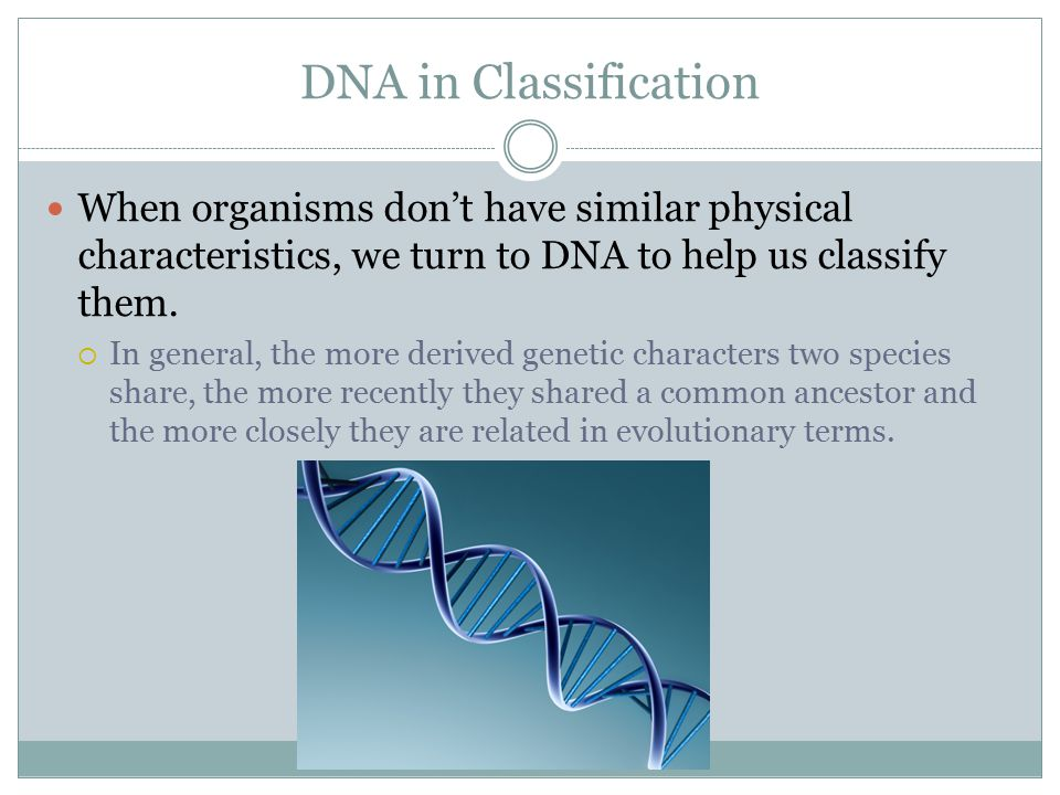 DNA in Classification When organisms don't have similar physical characteristics, we turn to DNA to help us classify them.