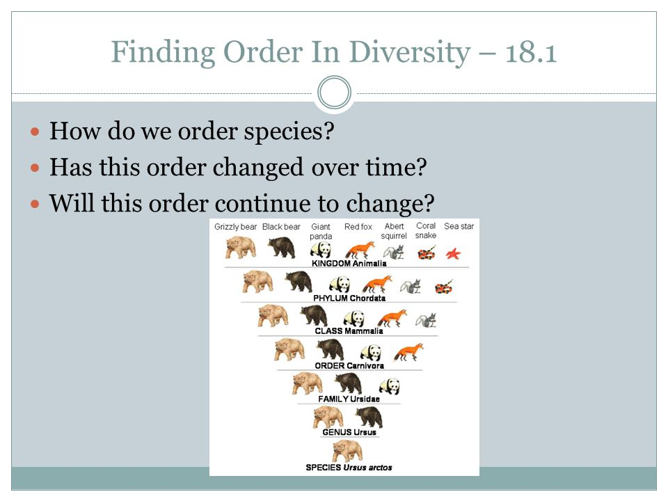 Finding Order In Diversity – 18.1