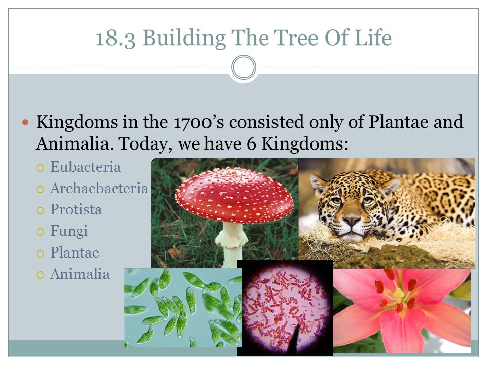 18.3 Building The Tree Of Life