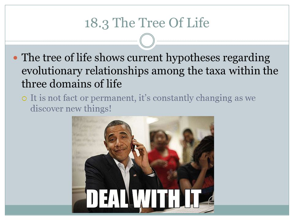 18.3 The Tree Of Life The tree of life shows current hypotheses regarding evolutionary relationships among the taxa within the three domains of life.