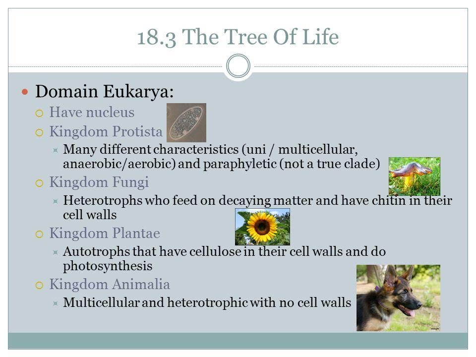 18.3 The Tree Of Life Domain Eukarya: Have nucleus Kingdom Protista