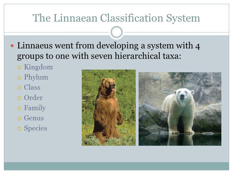 The Linnaean Classification System