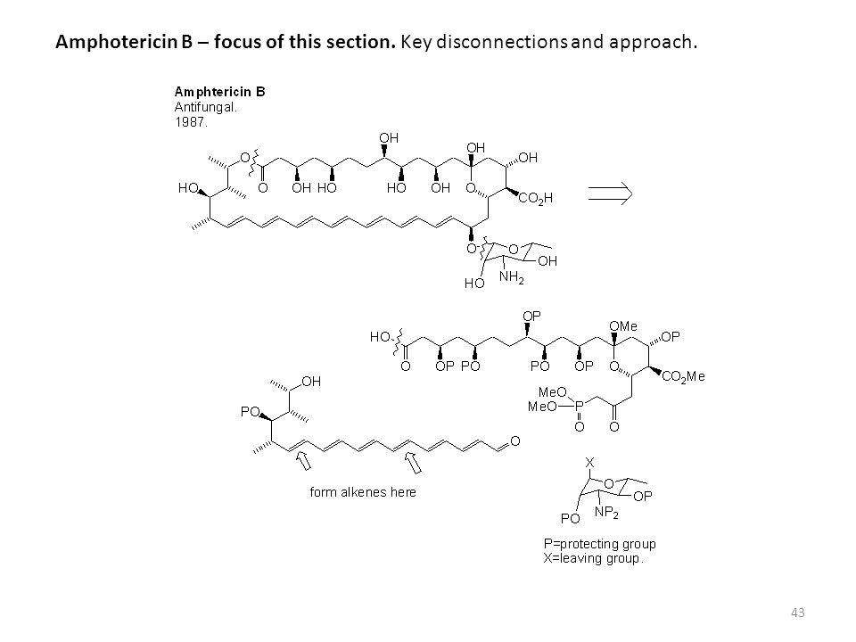 Amphotericin B – focus of this section. Key disconnections and approach.