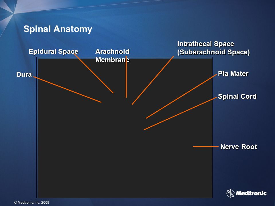 Spinal Anatomy Intrathecal Space (Subarachnoid Space) Epidural Space