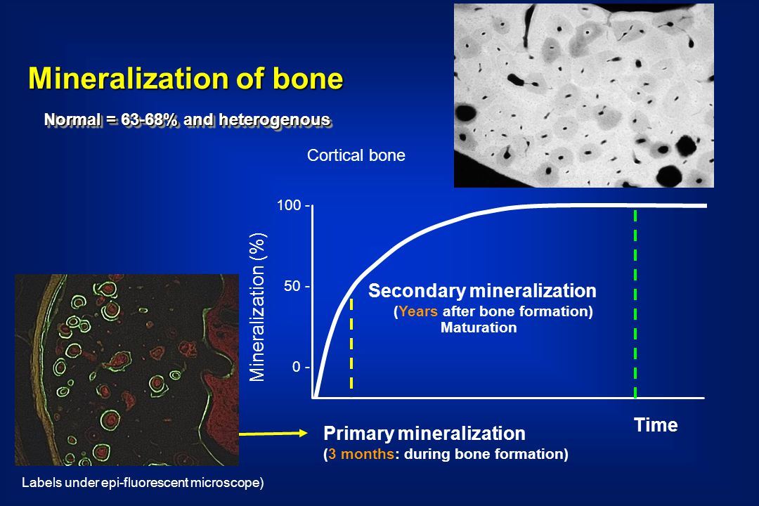 Mineralization of bone