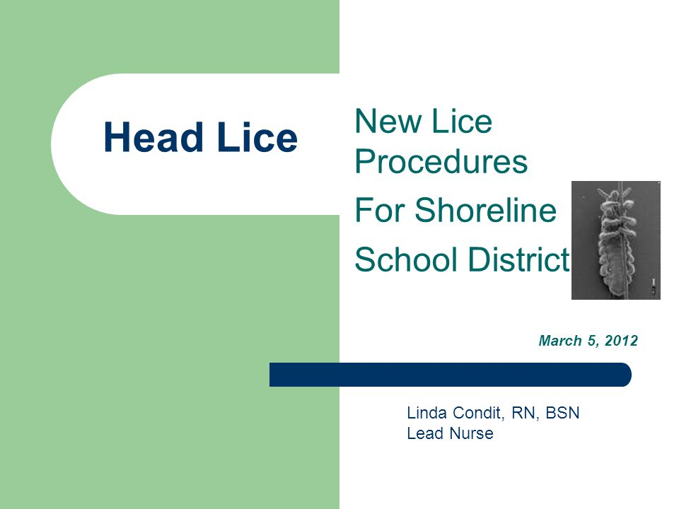 New Lice Procedures For Shoreline School District March 5, 2012