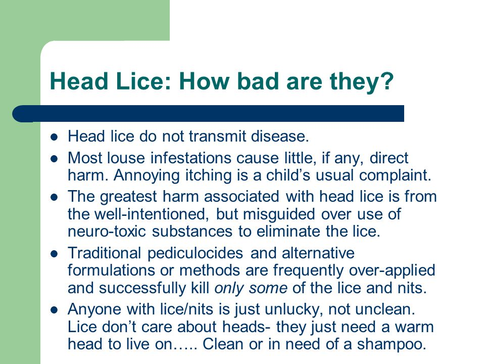 Head Lice: How bad are they