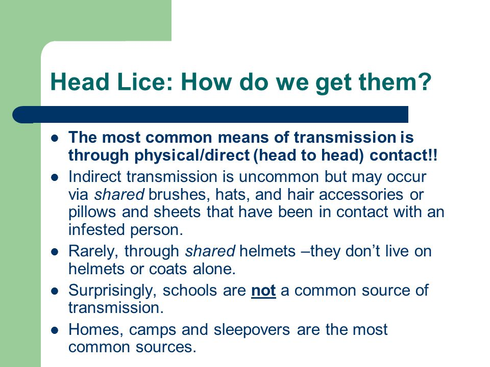 Head Lice: How do we get them