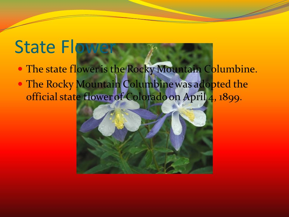State Flower The state flower is the Rocky Mountain Columbine.