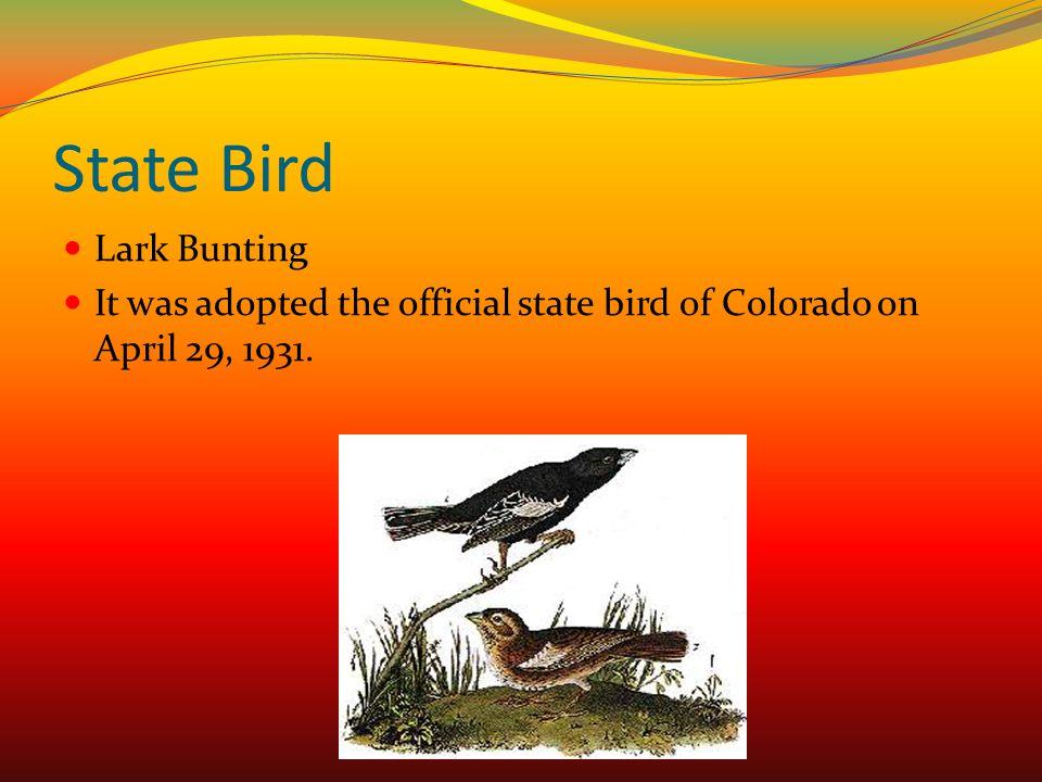 State Bird Lark Bunting
