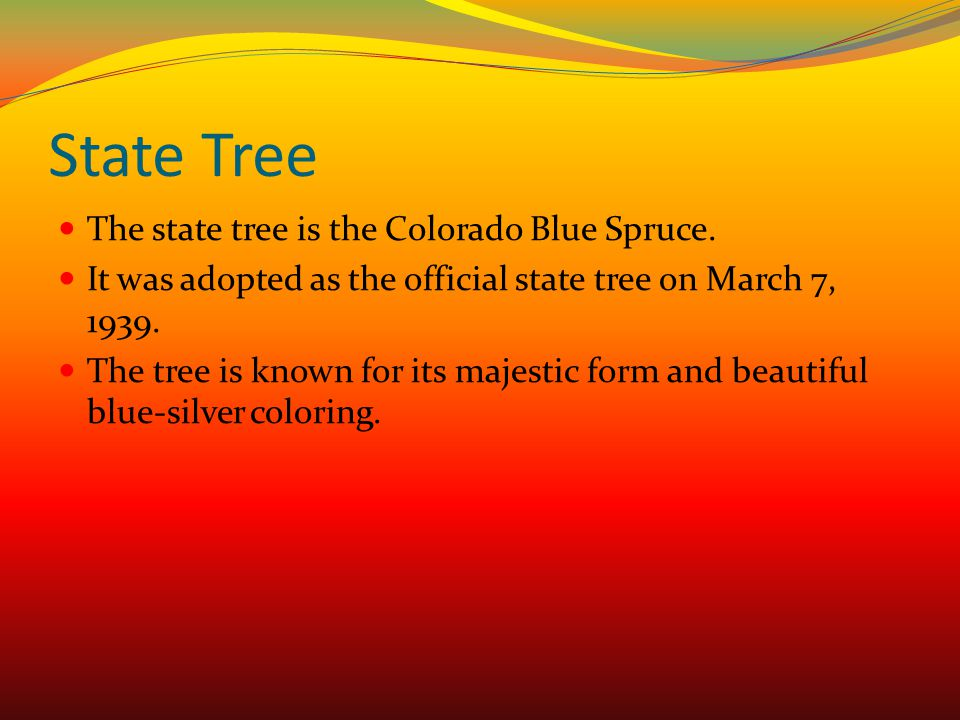 State Tree The state tree is the Colorado Blue Spruce.