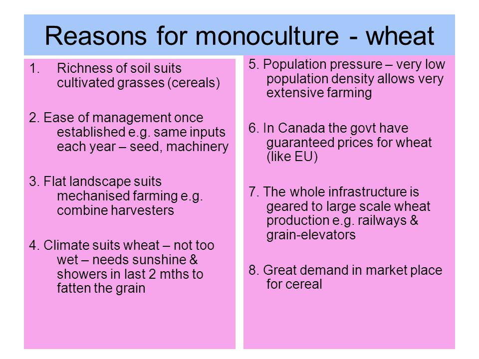Reasons for monoculture - wheat