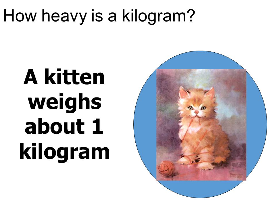 A kitten weighs about 1 kilogram