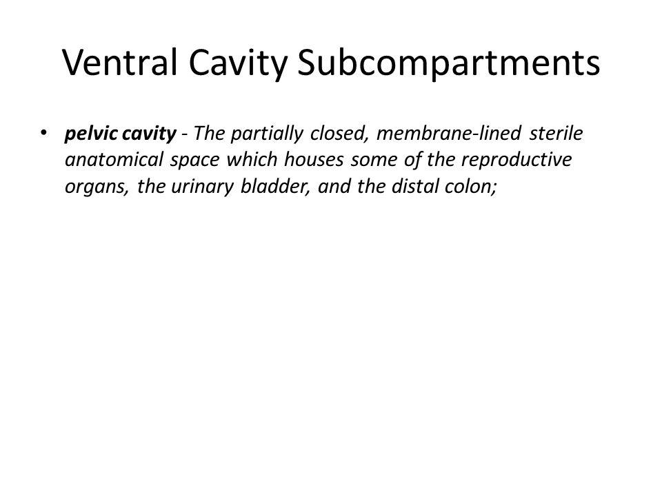 Ventral Cavity Subcompartments