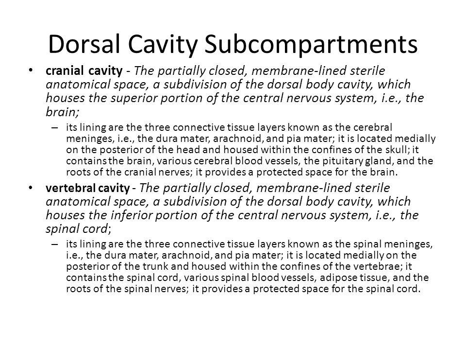 Dorsal Cavity Subcompartments