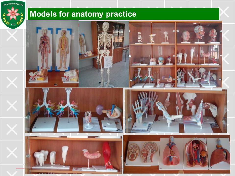 Models for anatomy practice