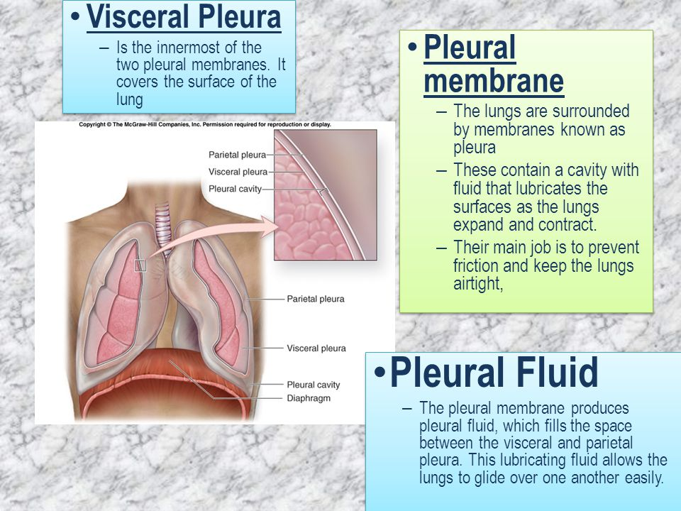 Structure of the Respiratory system - ppt download