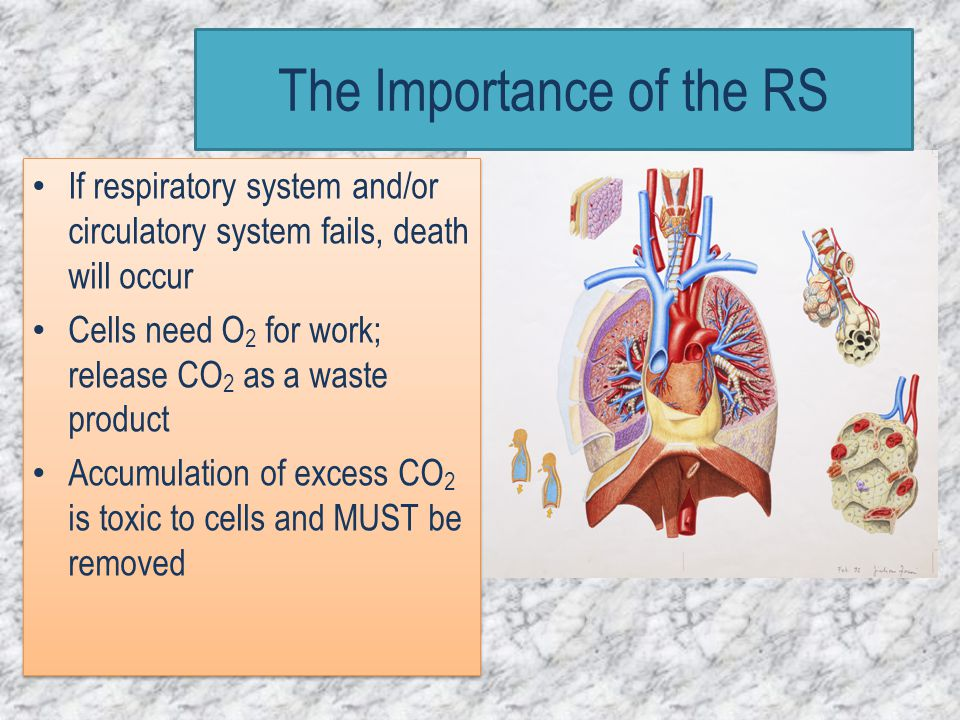 The Importance of the RS