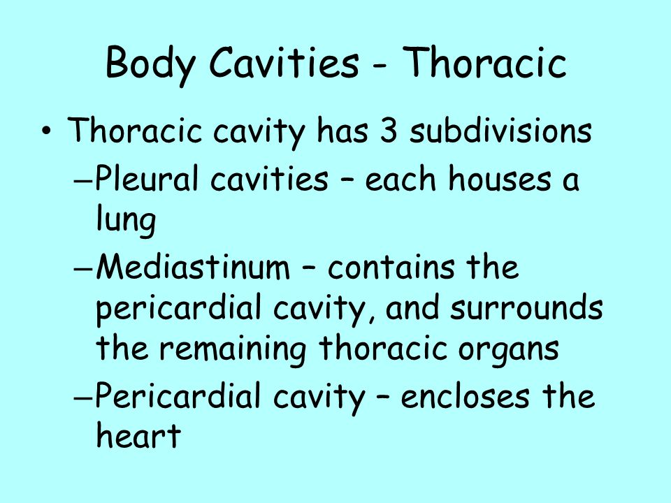 Body Cavities - Thoracic