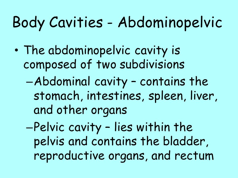 Body Cavities - Abdominopelvic