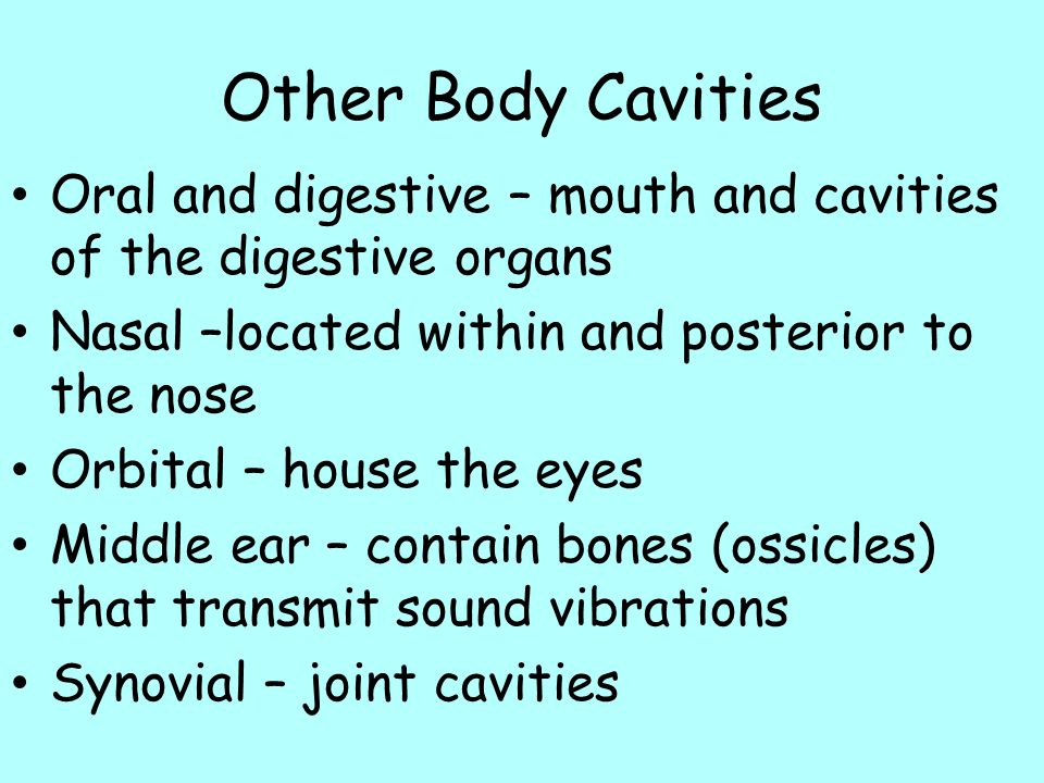 Other Body Cavities Oral and digestive – mouth and cavities of the digestive organs. Nasal –located within and posterior to the nose.