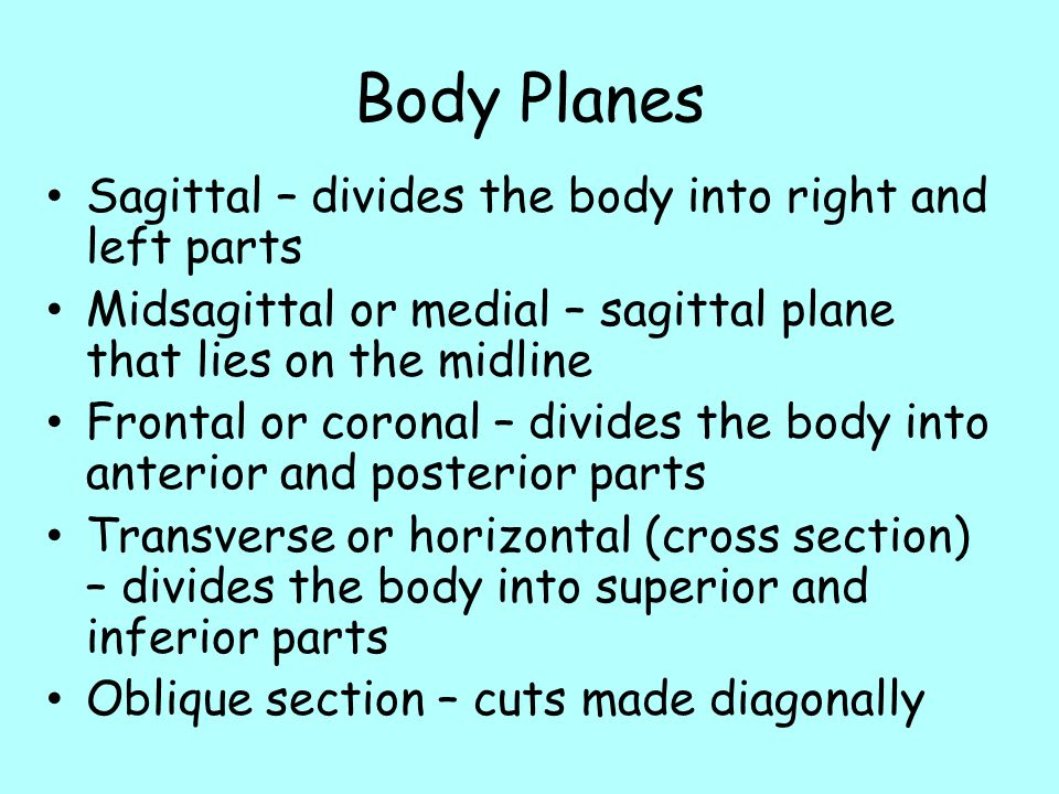 Body Planes Sagittal – divides the body into right and left parts