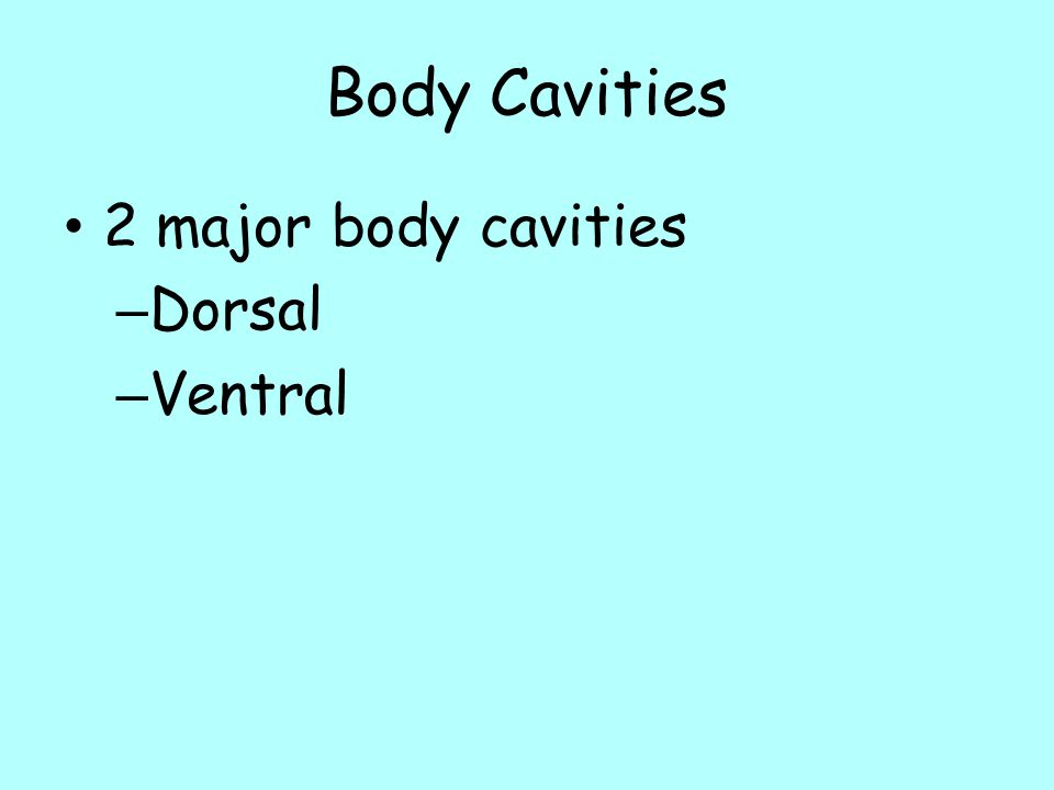 Body Cavities 2 major body cavities Dorsal Ventral