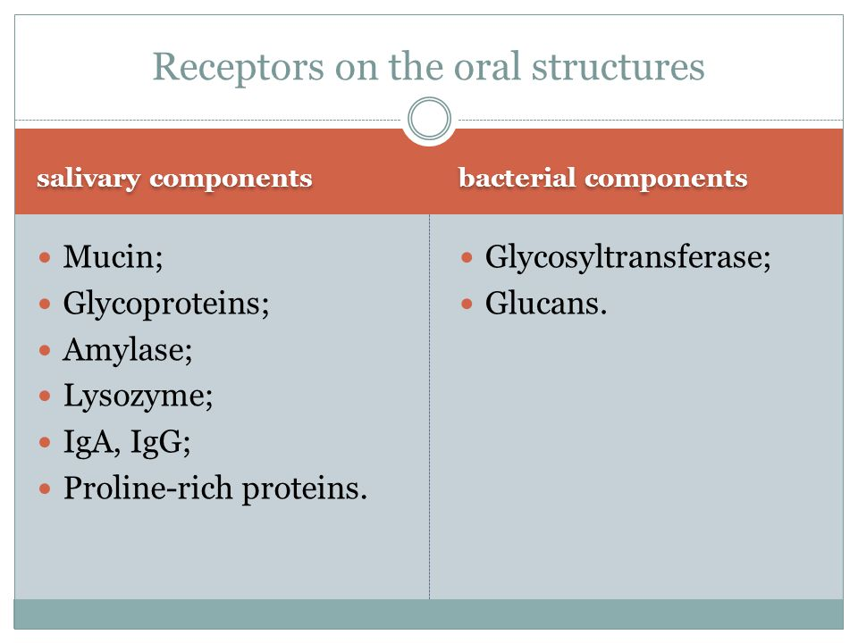 Receptors on the oral structures