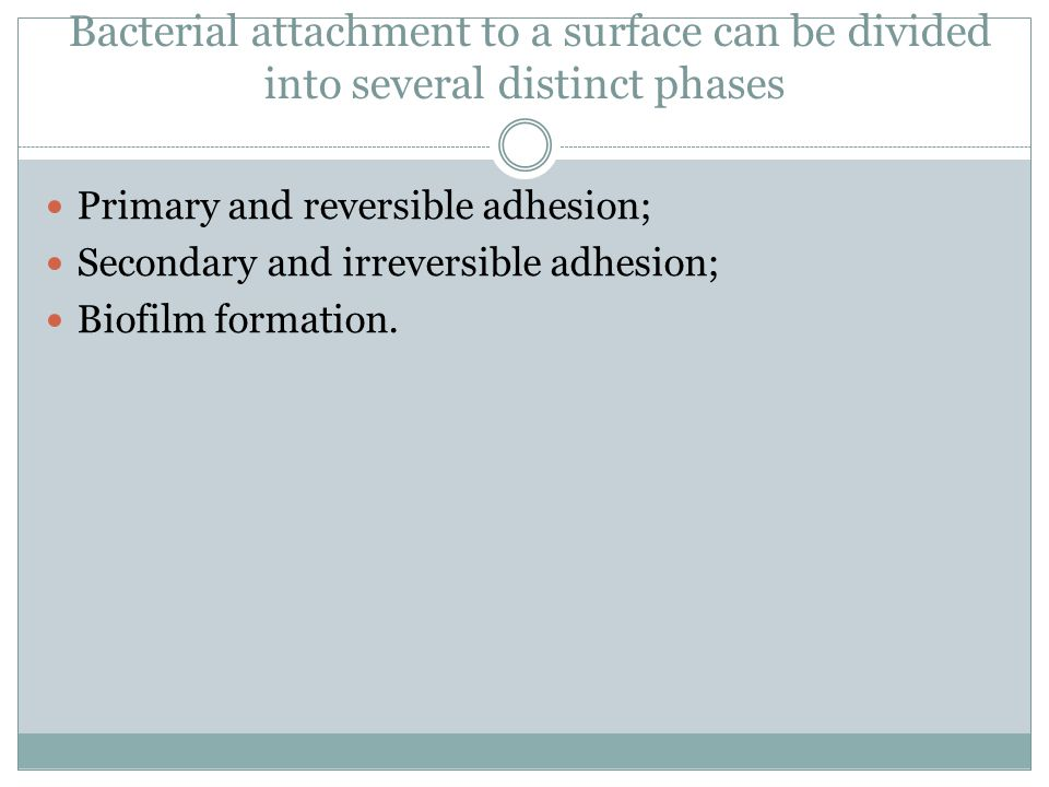 Bacterial attachment to a surface can be divided into several distinct phases