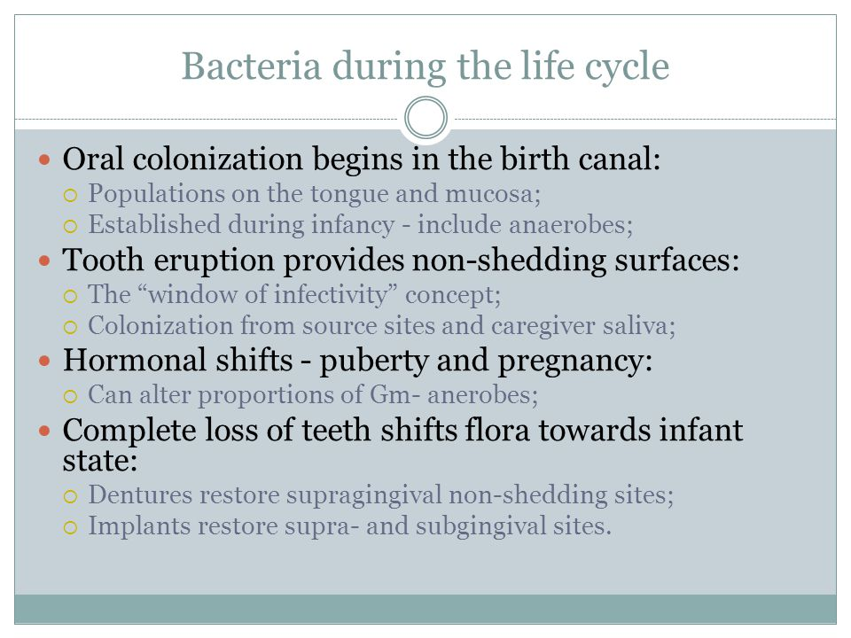 Bacteria during the life cycle