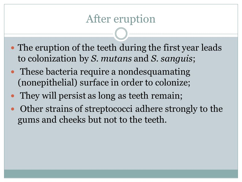 After eruption The eruption of the teeth during the first year leads to colonization by S. mutans and S. sanguis;