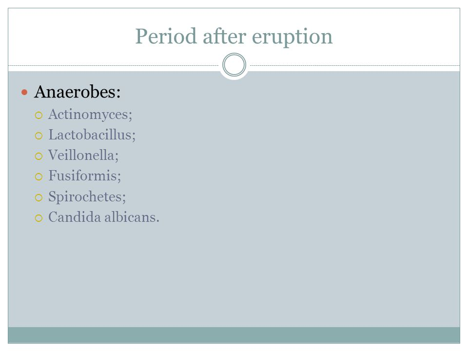 Period after eruption Anaerobes: Actinomyces; Lactobacillus;