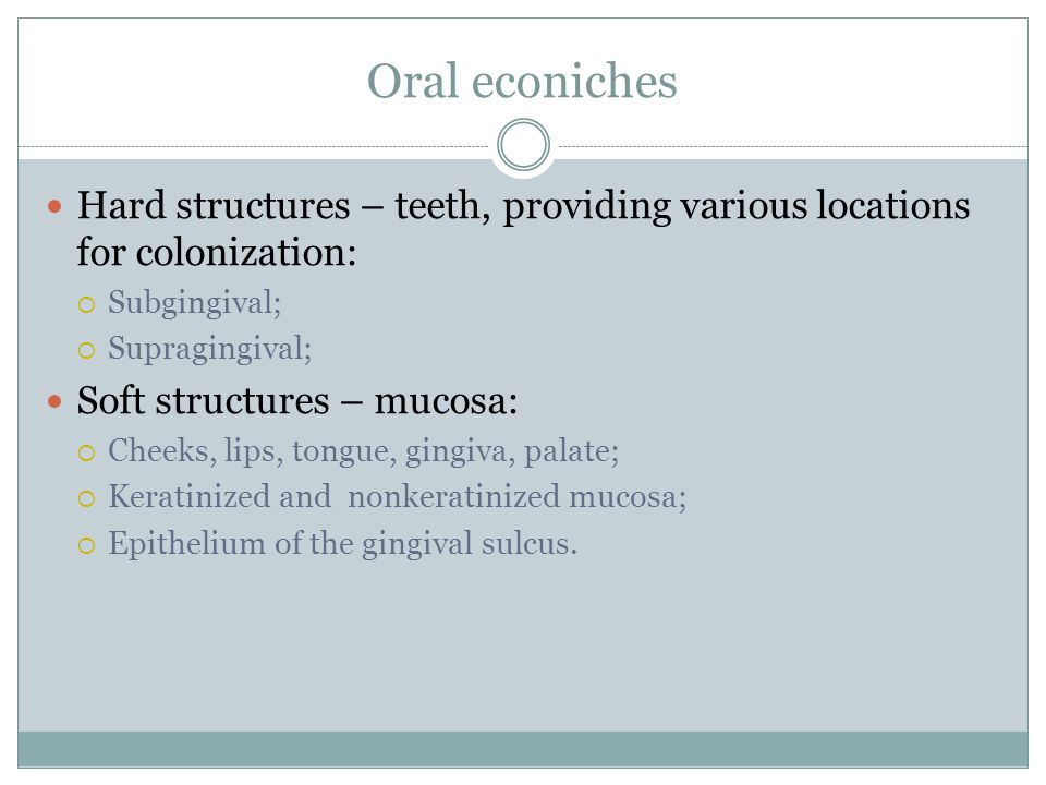 Oral econiches Hard structures – teeth, providing various locations for colonization: Subgingival;