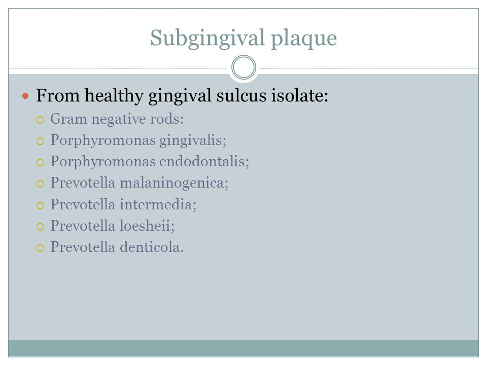 Subgingival plaque From healthy gingival sulcus isolate: