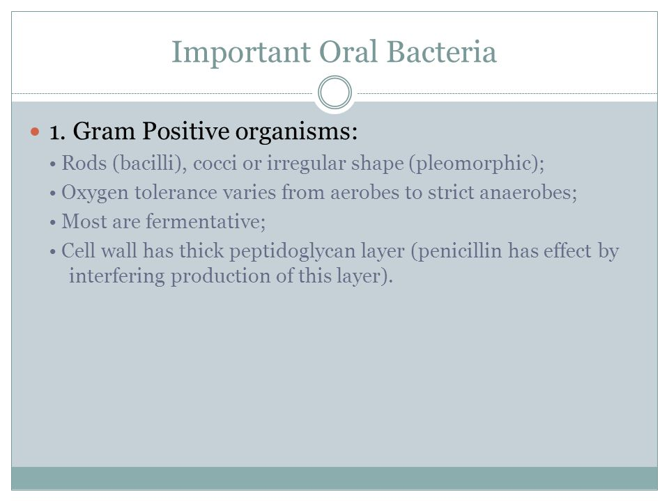 Important Oral Bacteria