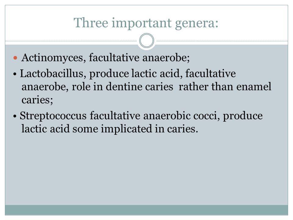 Three important genera: