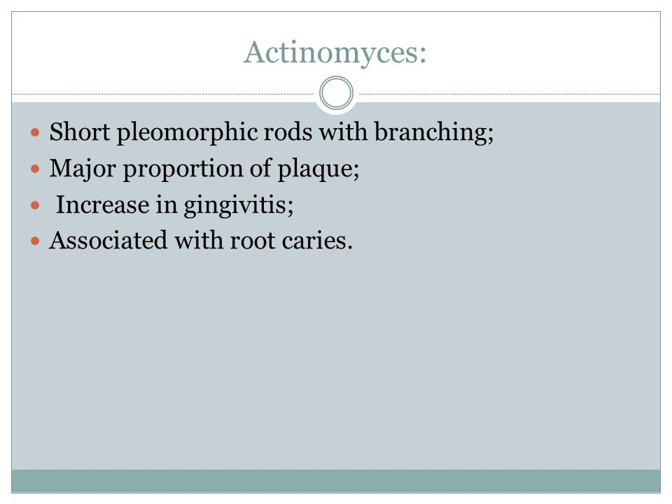 Actinomyces: Short pleomorphic rods with branching;