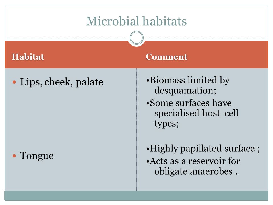 Microbial habitats Lips, cheek, palate Tongue