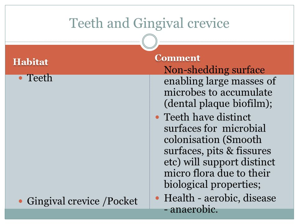 Teeth and Gingival crevice