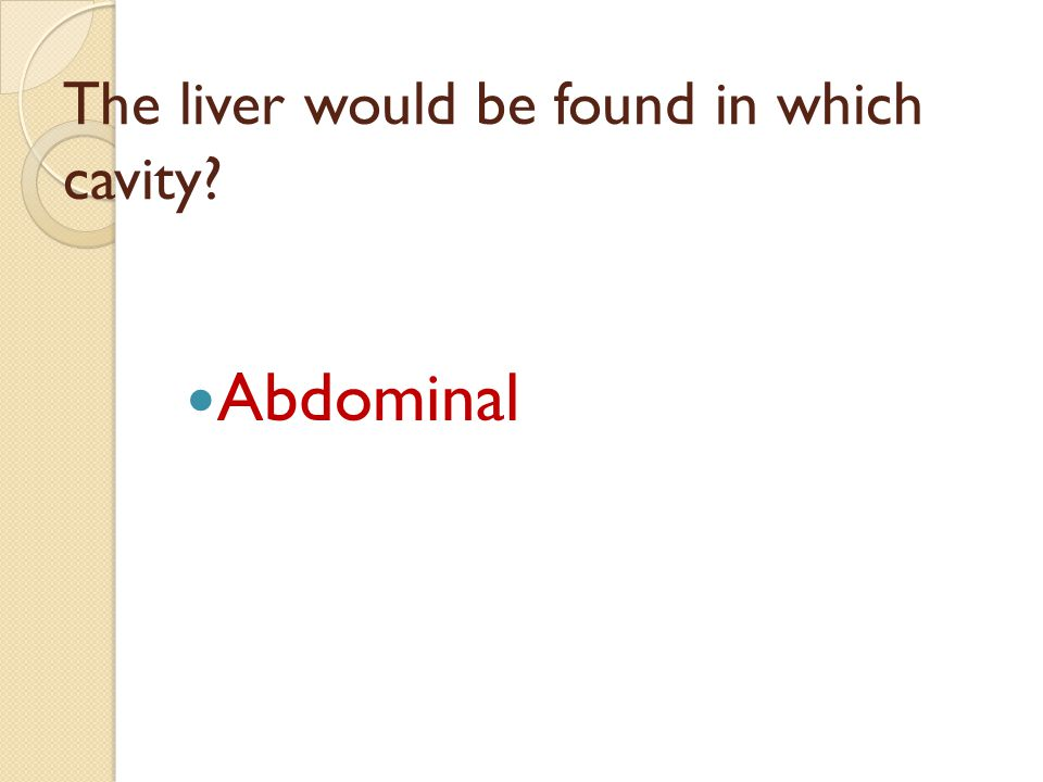 The liver would be found in which cavity