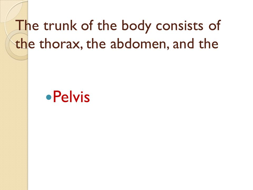 The trunk of the body consists of the thorax, the abdomen, and the