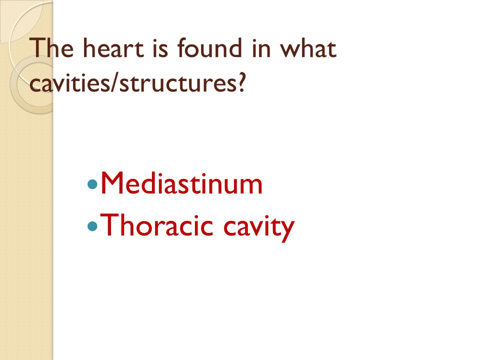 The heart is found in what cavities/structures