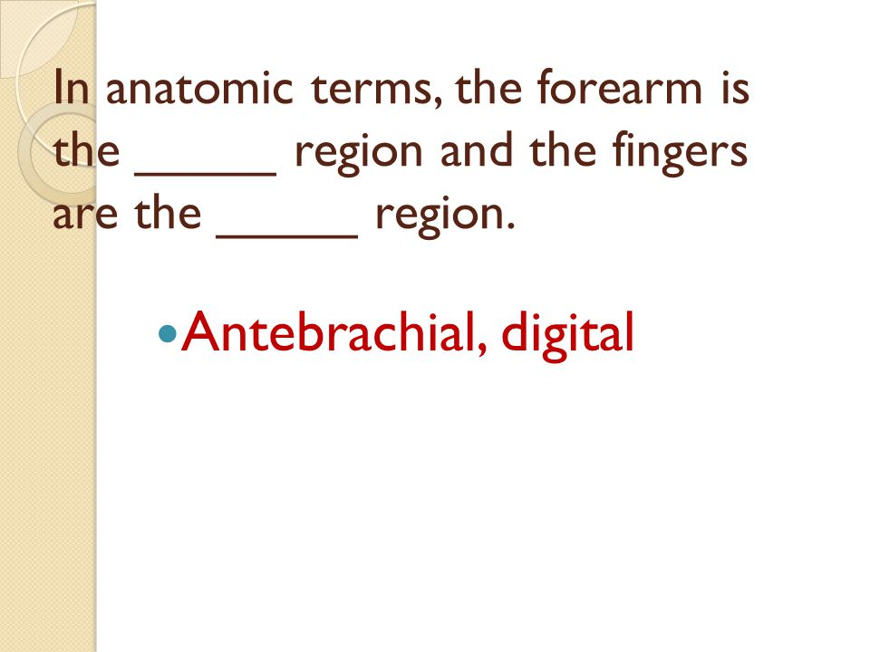 In anatomic terms, the forearm is the _____ region and the fingers are the _____ region.