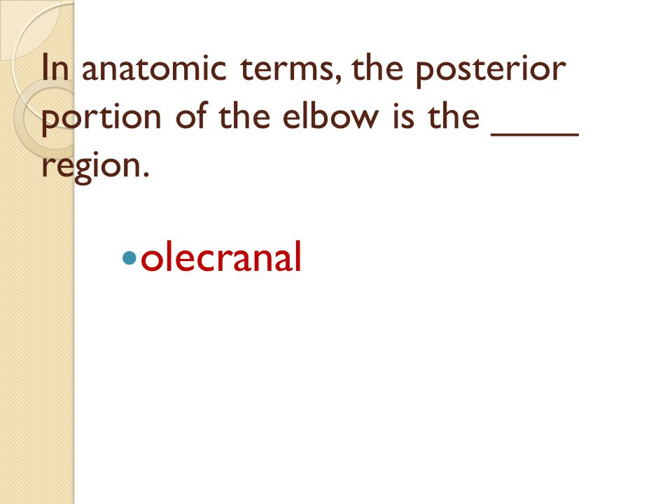 In anatomic terms, the posterior portion of the elbow is the ____ region.