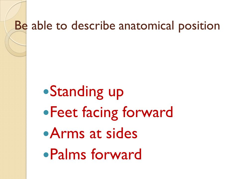 Be able to describe anatomical position