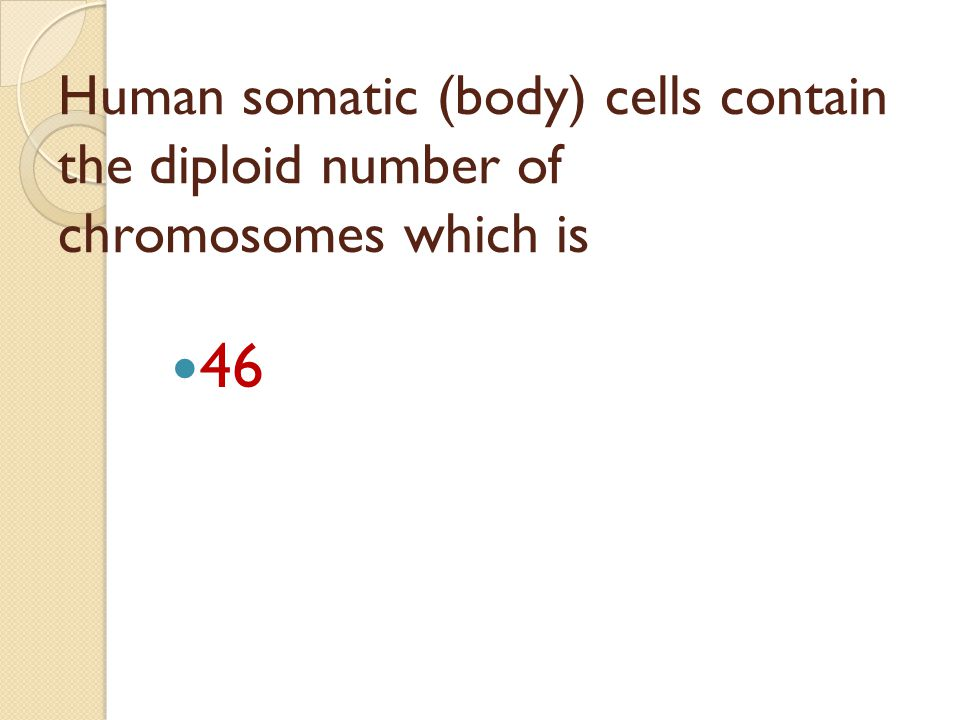 Human somatic (body) cells contain the diploid number of chromosomes which is