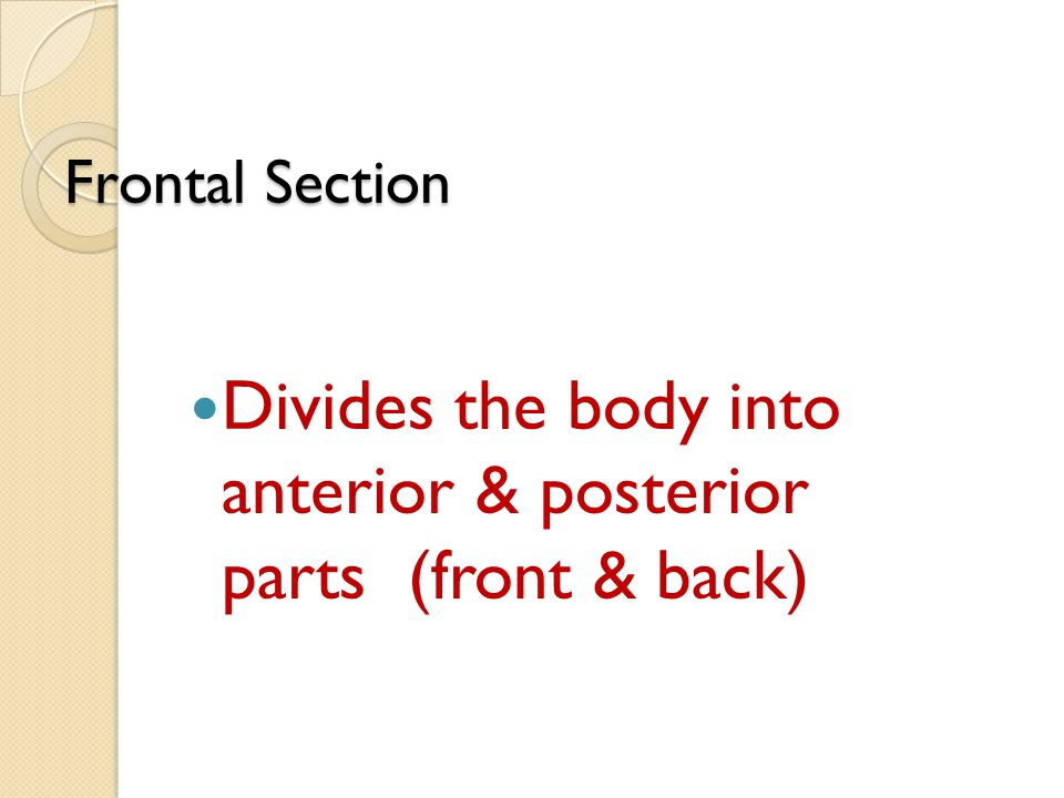 Divides the body into anterior & posterior parts (front & back)