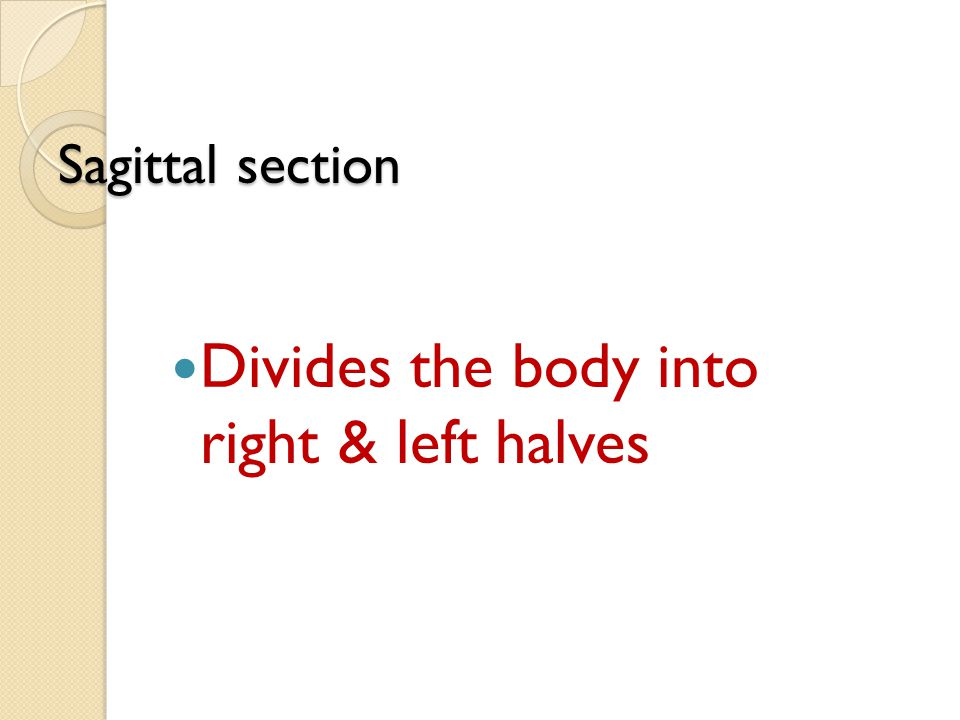Divides the body into right & left halves